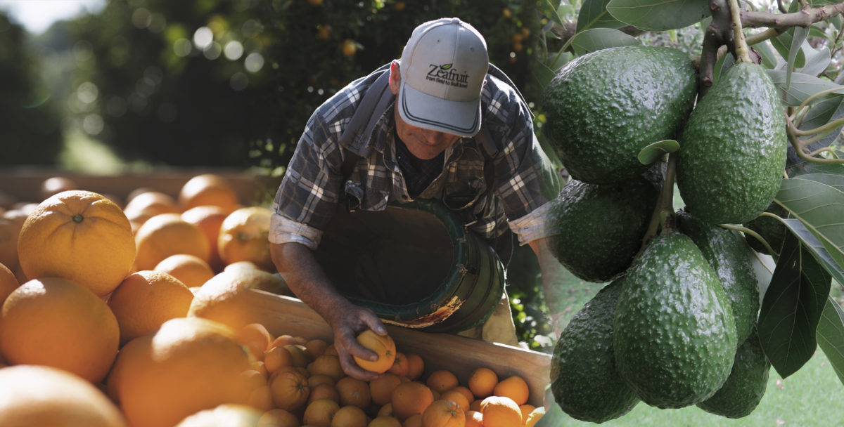 Zeafruit produce grower with citrus and avocados
