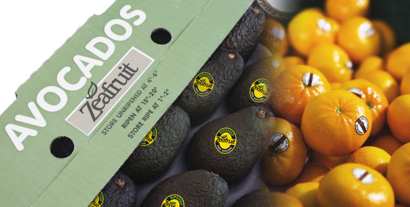 Zeafruit Produce Marketing Avocado Tray and Citrus
